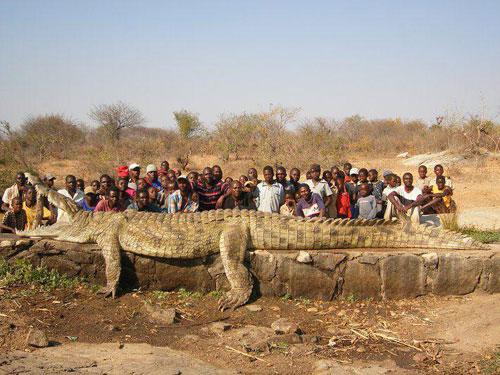 monster crocodile