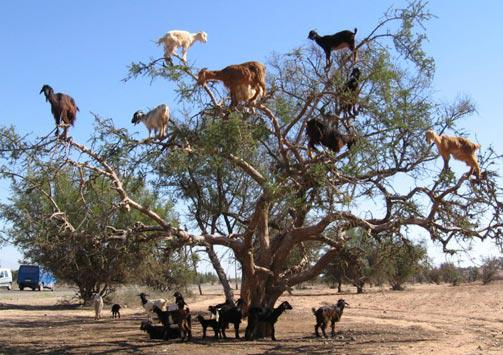 zimbabwean christmas tree